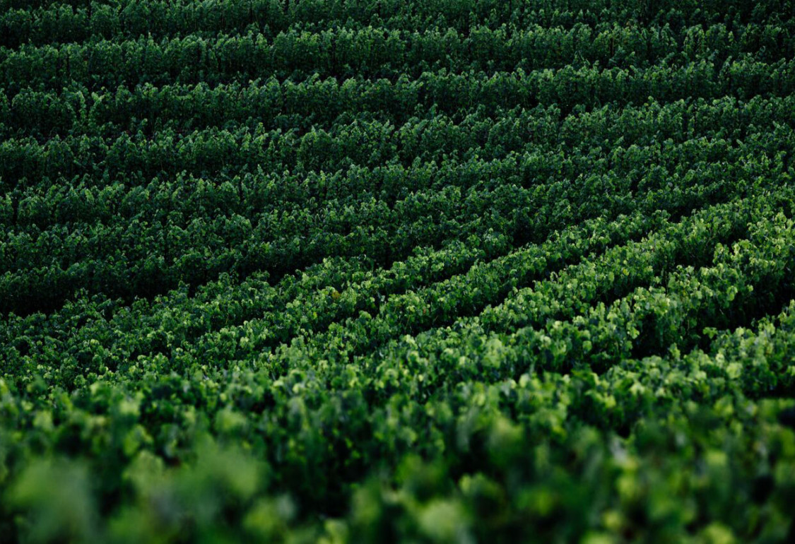 Futo Wines - We believe the pinnacle of wine quality comes from hand farming hillside vineyards.